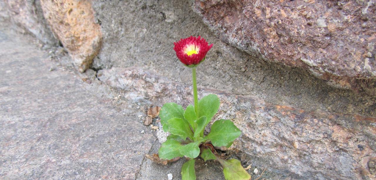 Heilpflanzen und naturheilkundliche Maßnahmen